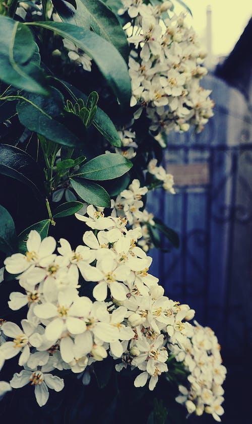 Ilmainen kuvapankkikuva tunnisteilla kasvikunta, kasvit, kukat, kukinta