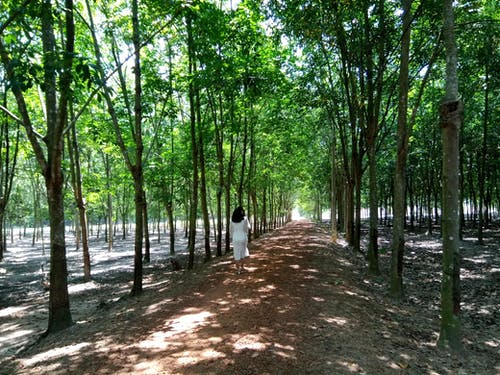 Fotos de stock gratuitas de belleza en la naturaleza, blanco y negro, bosque, cao su