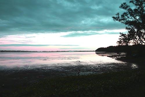 Immagine gratuita di canne, lago, nuvole, tramonto