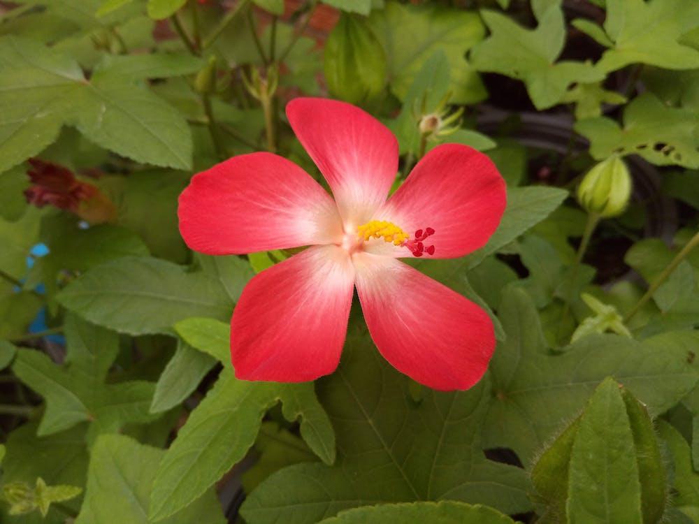園林花卉, 紅色的花朵, 美丽的花