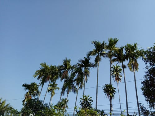 Бесплатное стоковое фото с дневной свет, зеленый, лист, облака