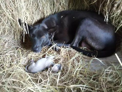 Бесплатное стоковое фото с домашняя собака, животное, любитель домашних животных, любитель животных