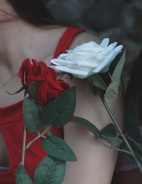 Free stock photo of details, red roses, white rose