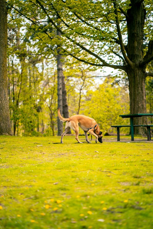 Photo of Dog Sniffing on Grass