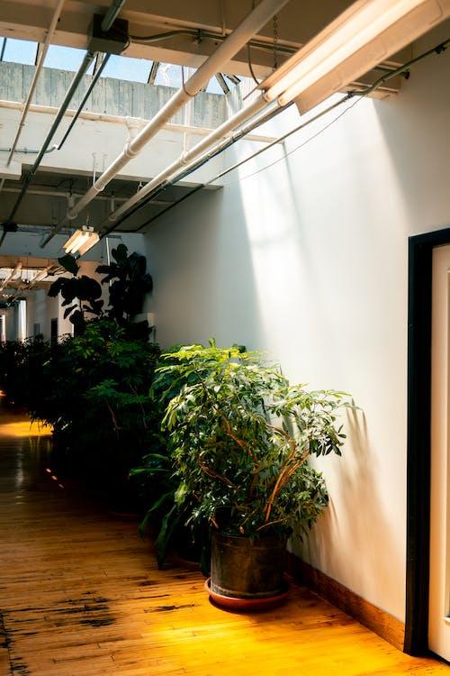 Foto profissional grátis de arquitetura, casa, contemporâneo, de madeira