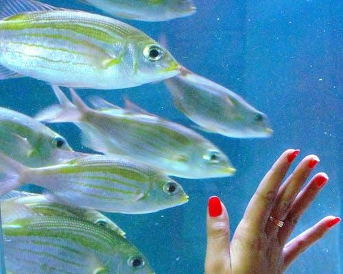 Immagine gratuita di azzurro, mano, occhi, pesce