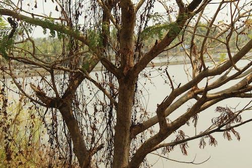 Ingyenes stockfotó fa teteje, faágak, fák, zöld fa béka témában
