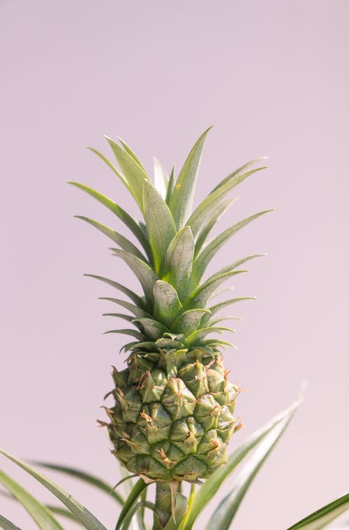 Green Pineapple Fruit