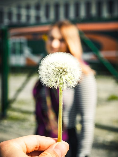 Free stock photo of bokeh, flower, girl, in focus