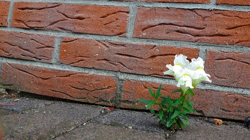 Free stock photo of brick wall, flower, masonry, road