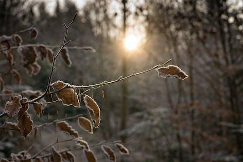 Gratis lagerfoto af blade, forkølelse, frossen, frost