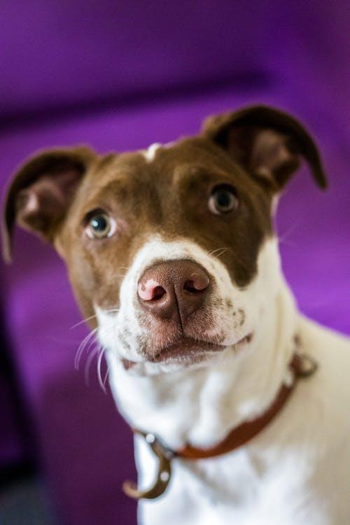 Základová fotografie zdarma na téma pitbull, roztomilá dívka, roztomilá zvířátka