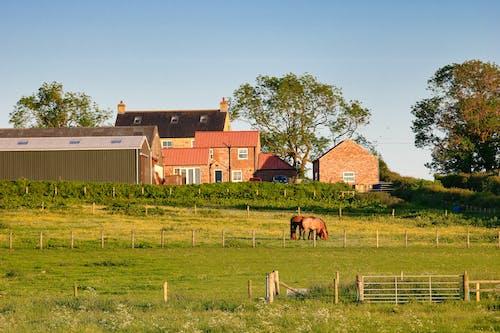 Foto stok gratis agrikultura, bidang, kuda, northumberland