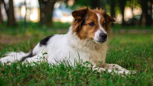 狗 的 免費圖庫相片