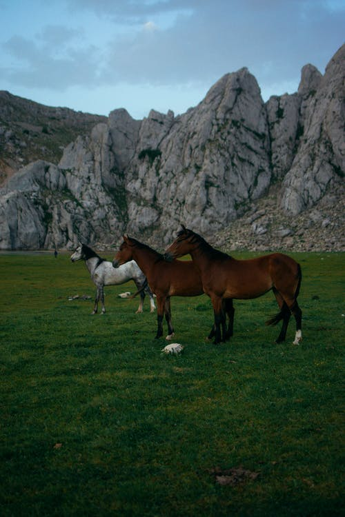 Two Brown Horses and Grey
