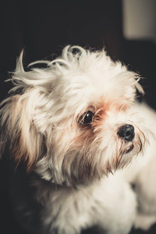 Ảnh lưu trữ miễn phí về cận cảnh, chó, con vật, dễ thương