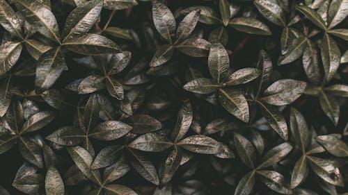 Gratis arkivbilde med anlegg, blader, grønn