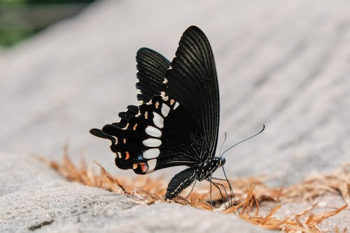 Free stock photo of butterfly, cambodia, nature
