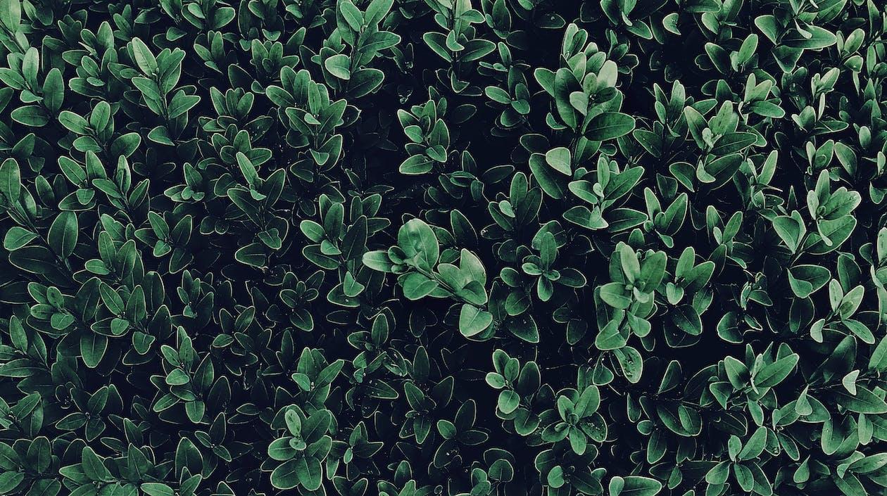 4k-baggrund, blade, Botanisk
