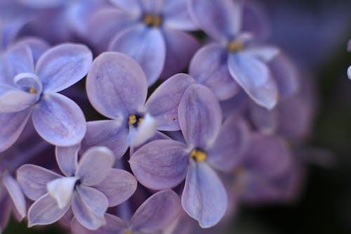 Fotobanka sbezplatnými fotkami na tému divé kvety, divý kvet, farba, farby