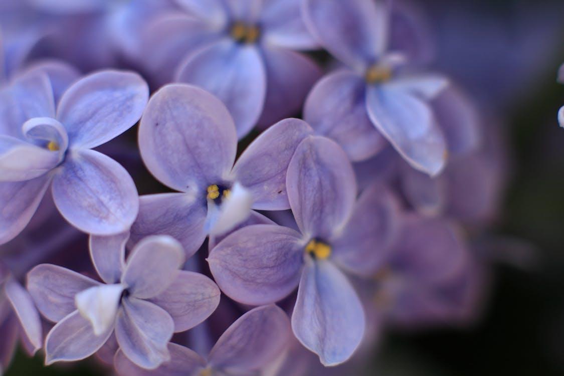 art de flors, blau, color