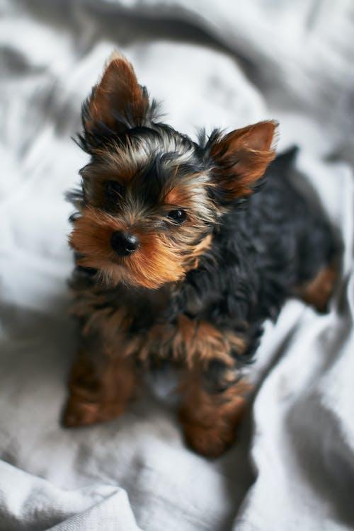 Foto profissional grátis de animal, animal doméstico, cachorro, canino