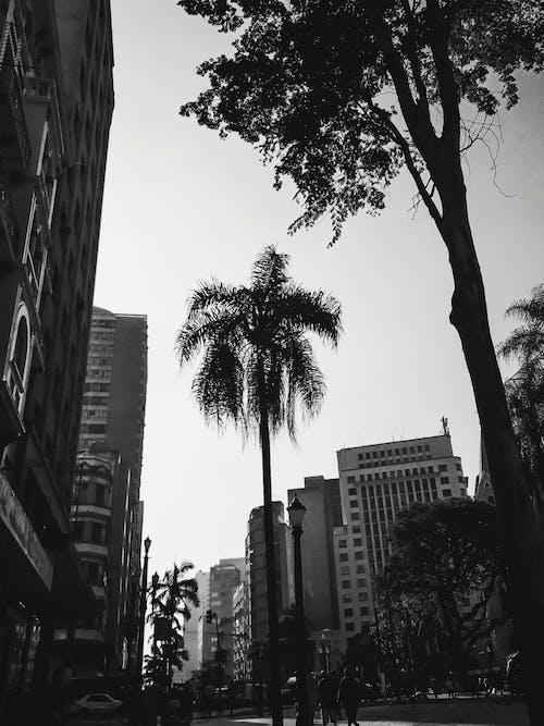 人, 低角度拍攝, 光, 公園 的 免費圖庫相片