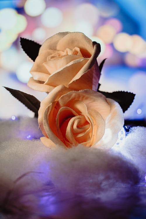 Gratis stockfoto met bloemen, bokeh, lampen, roos