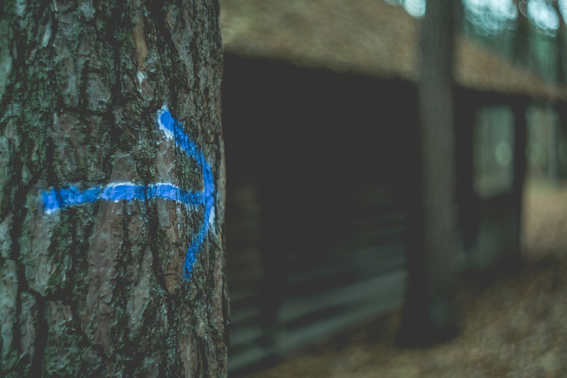 action, arrow, blur