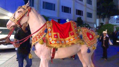 Immagine gratuita di cavallo, cerimoniale, india, matrimonio