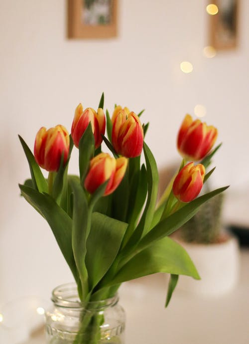 Close-Up Photo of Tulips in Glass Jar