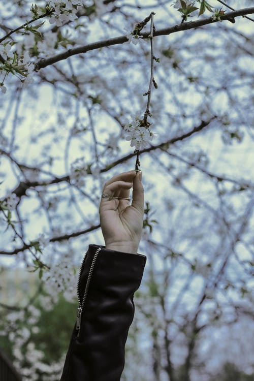 Person Touching Flowers On Tree