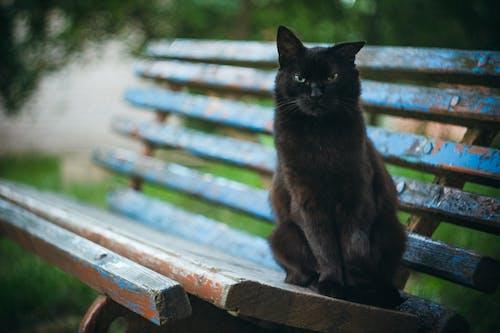 Imagine de stoc gratuită din mama natură, mâță, natură, pisică neagră
