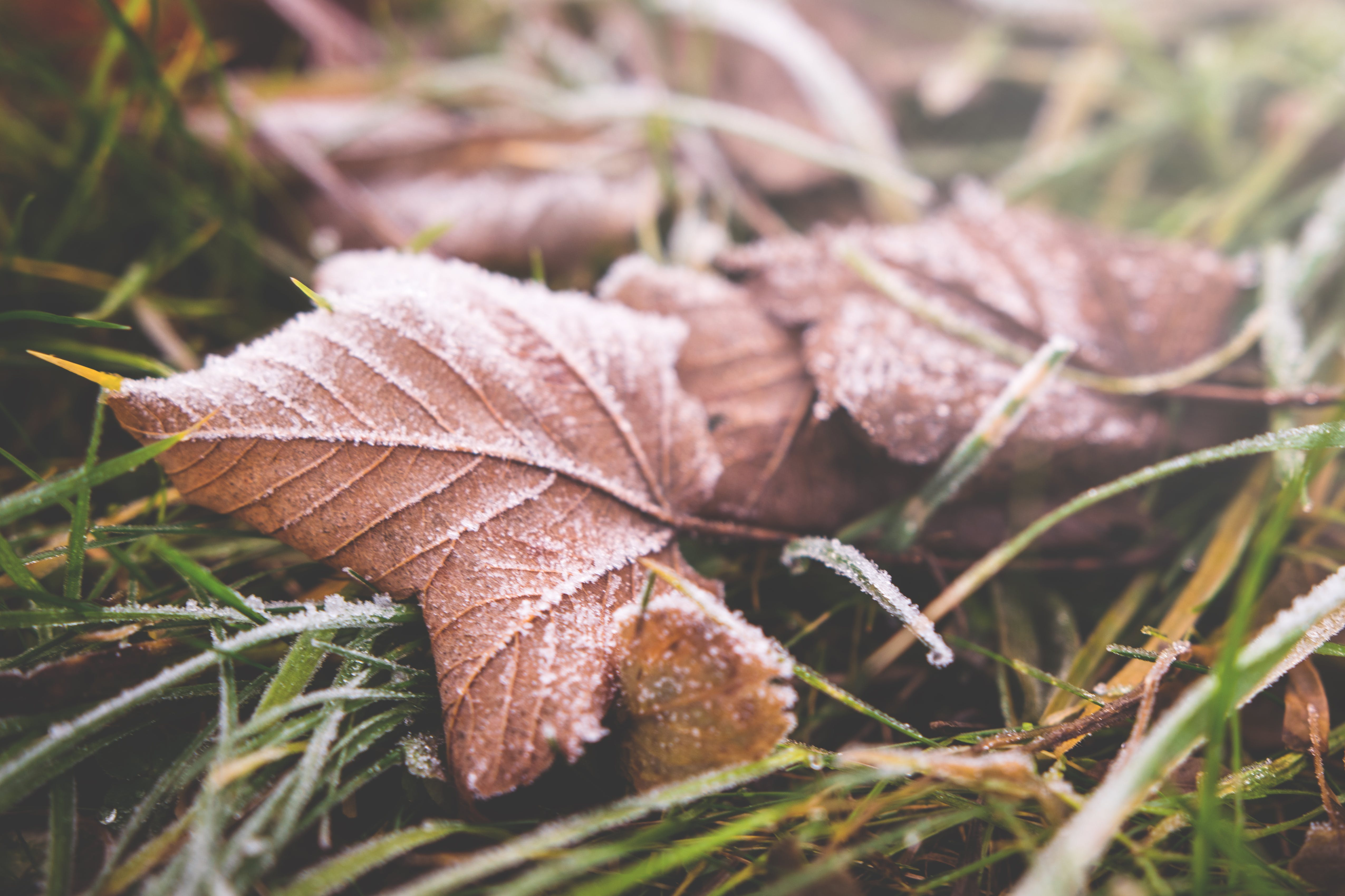Brown Leafed on Green Grass in Selective Focus Photography