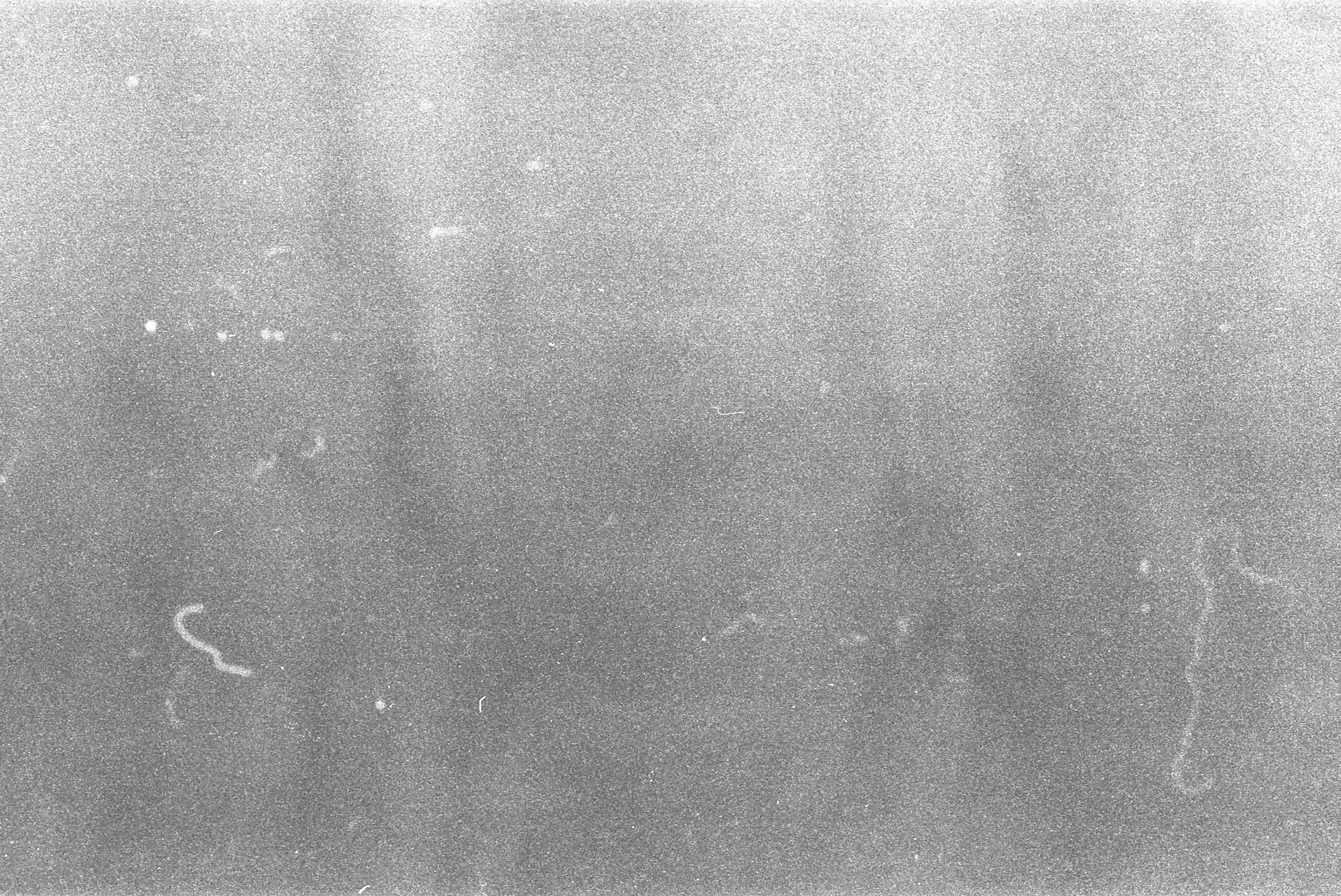 free stock photo of 35mm film grain