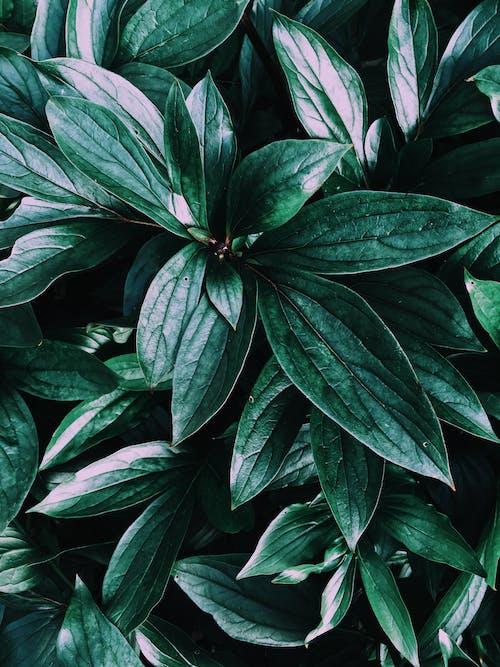 Foto profissional grátis de aumento, botânico, close, exuberante