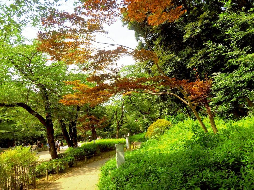 Free stock photo of foot path, park, tree