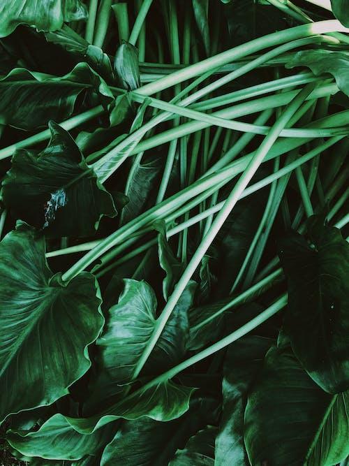 Gratis lagerfoto af abstrakt, biologi, blad, blomst