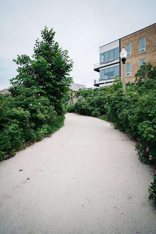 Immagine gratuita di edificio, esterno, foglie, impianti