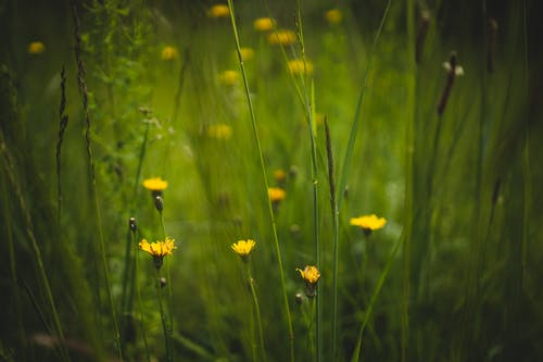 Бесплатное стоковое фото с выборочный фокус, глубина резкости, желтые цветы, лепестки