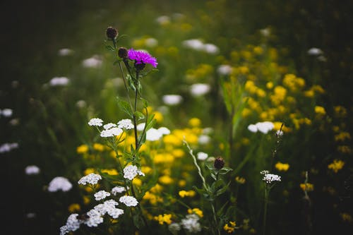 4k duvar kağıdı, alan derinliği, bitki örtüsü, bitkiler içeren Ücretsiz stok fotoğraf