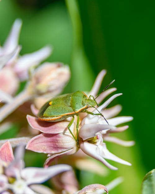 Selective Focus Photography Of Green Bug On Pink Flower