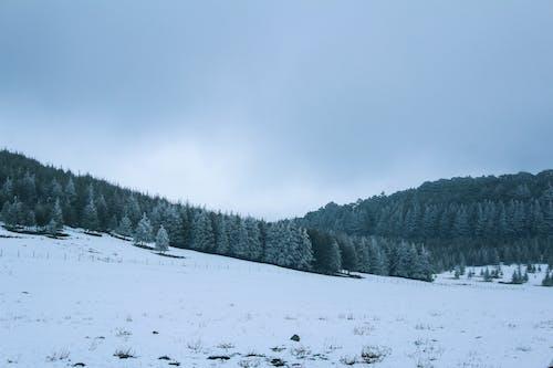 Ilmainen kuvapankkikuva tunnisteilla flunssa, jää, joulu, kolea