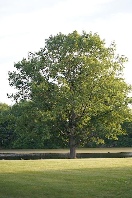 Darmowe zdjęcie z galerii z a7iii, drzewo, jezioro, na zewnątrz