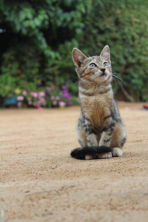 Ilmainen kuvapankkikuva tunnisteilla eläin, keskittyminen, kissa, kisu