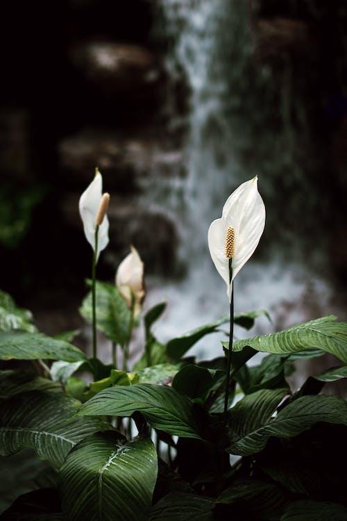 植物, 植物群, 綻放, 花 的 免费素材照片