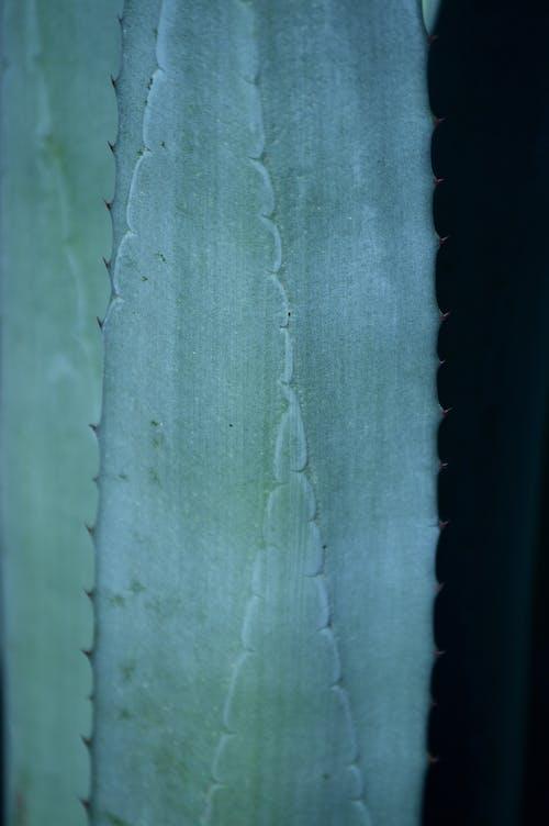 仙人掌, 公園, 墨西哥, 墨西哥人 的 免费素材照片
