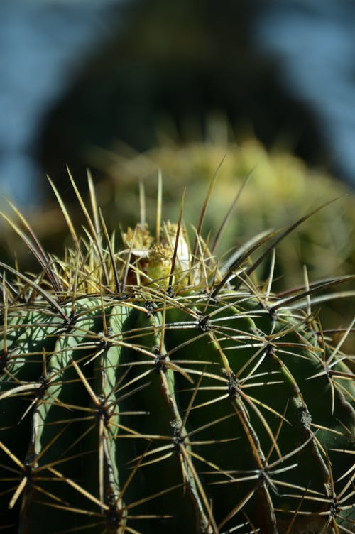 Close-Up Photo of Cactus Plant