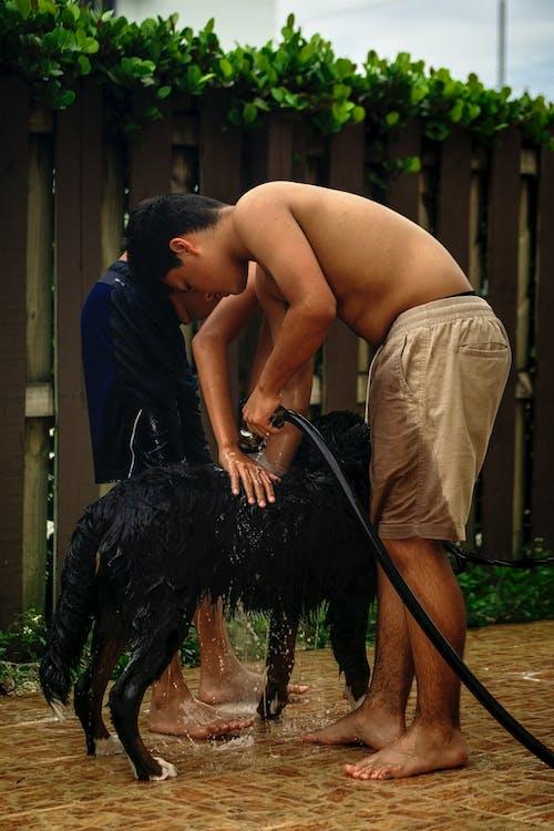 Základová fotografie zdarma na téma bernese, bernesepuppy, bernský salašnický pes, chlapci koupání psa