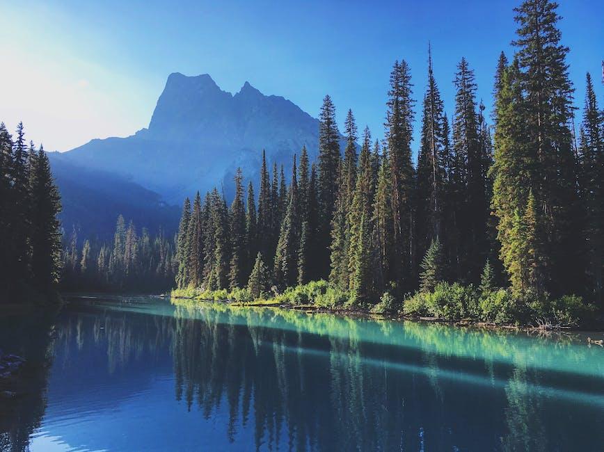 Photo of lake near tall trees